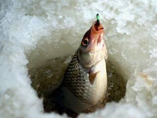 Зимова рибалка на річці Південний Буг!