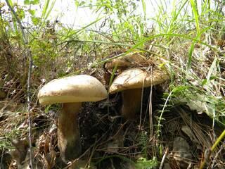 грибы в нашем лесу