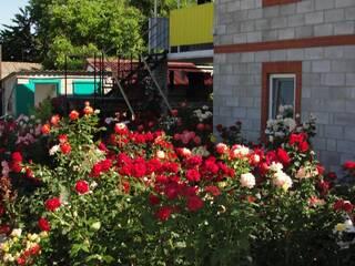 Во дворе более 100 кустов роз!
