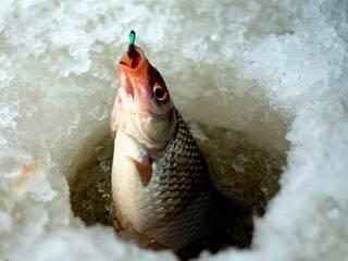 Запрошуємо всіх любителів зимової риболовлі в гостинну садибу «Родинне гніздо» в селі Канава, Вінницька область.
