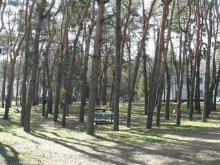 База отдыха Сосновый Бор Новоселовка, Днепропетровская область