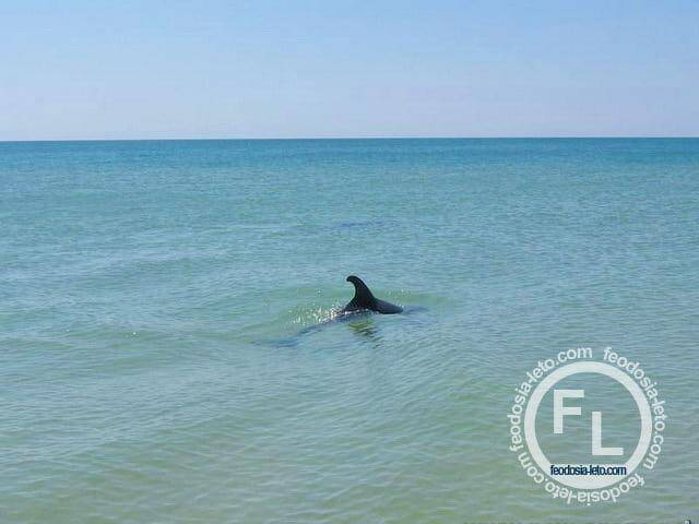 дельфины сказка