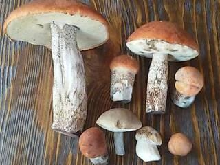 Пора за грибами!