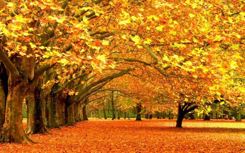 Золотая осень  в Карпатах. Где отдохнуть осенью?
