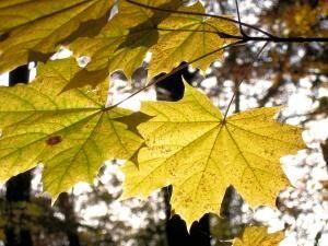 Отдых по ценам 2013 года. Золотая осень в Карпатах.