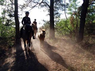 Осенние каникулы в конном детском лагере Like Horses Camp 28 октября - 4 ноября 2019